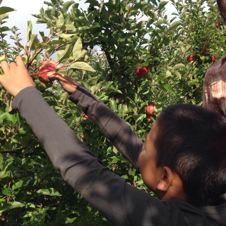 Het heet appels plukken, maar eigenlijk zou het draaien moeten heten.