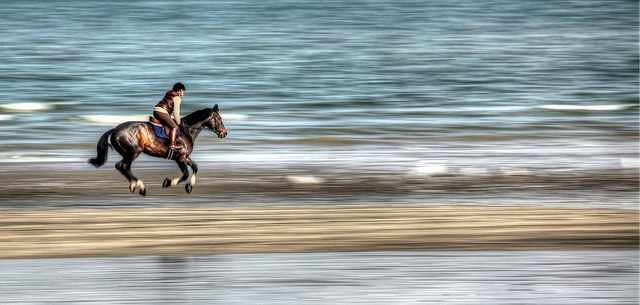 Foto: Pegasus door Photophilde onder CC YB 2.0 licentie